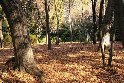 梢から木の葉舞う季節