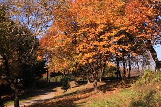 木々は黄色に彩りを見せている