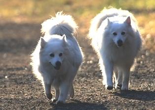 朝日と犬の散歩