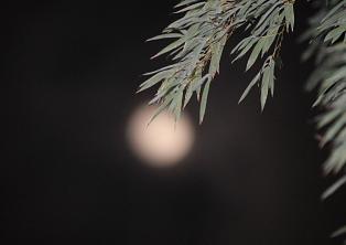 初雪前夜の満月