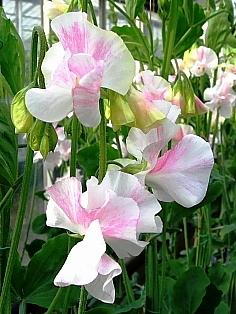 愛する人に贈る花束