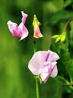感謝の気持ち贈る花束