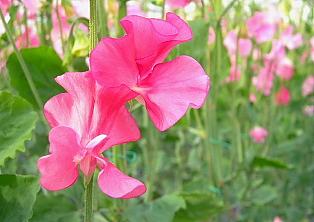 記念日に贈る花束
