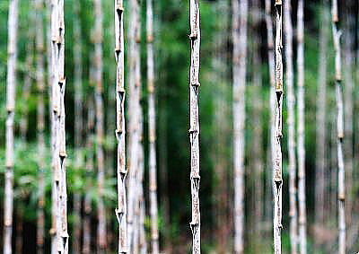 竹の持つ雰囲気は格別