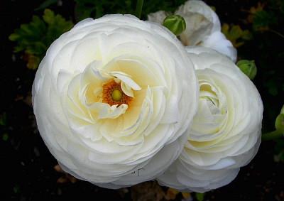 花の名前?