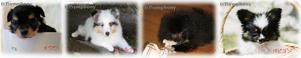 symphonyロゴ