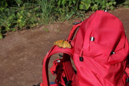 山頂にいた蝶