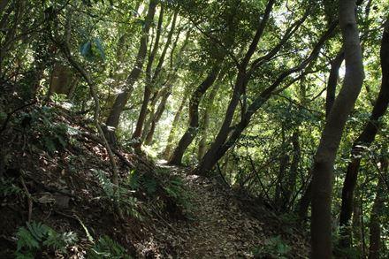 尺岳登山道