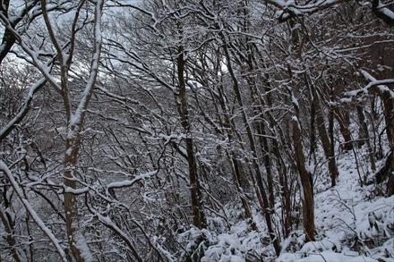 山頂付近の木々