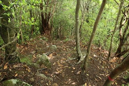 浅間山の急坂