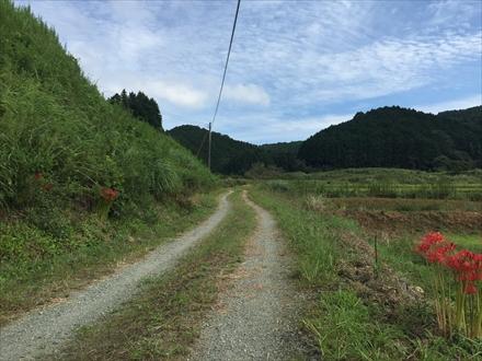 新立山への道