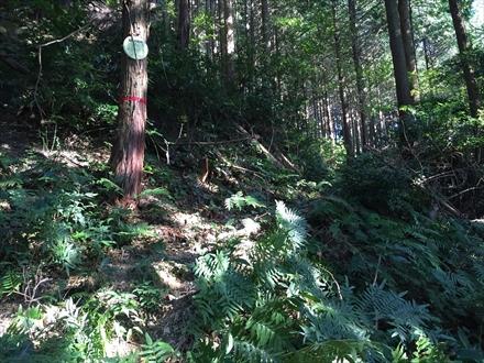 険しい登山道