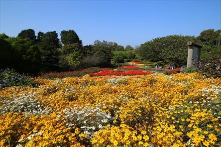 アイランドパークの花たち