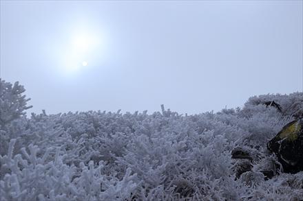 天狗ヶ城の霧氷