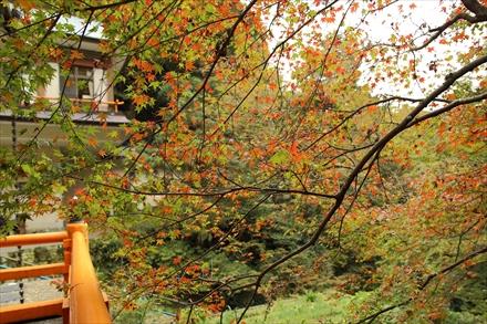 清水寺本殿の紅葉
