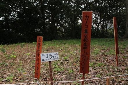 カノコ草の囲い