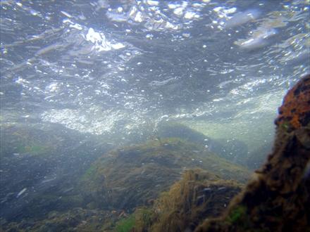 千石峡キャンプ場の水中