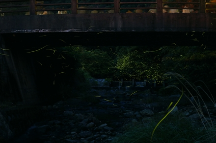 猪野公園の蛍