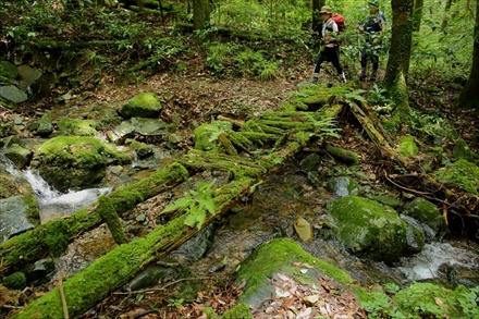 福智山の朽ちた橋ポイント