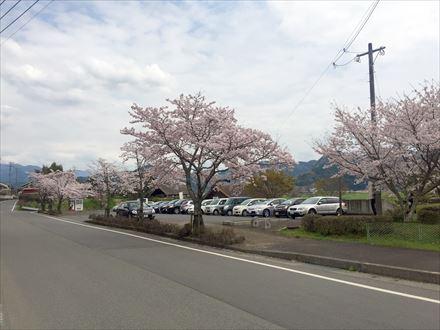 歴史の里公園駐車場の桜