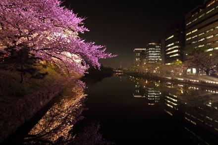 舞鶴公園の桜のライトアップ