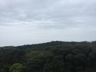 森側の景色