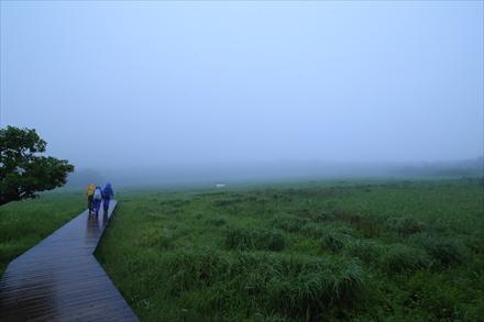 雨のタデ原湿原