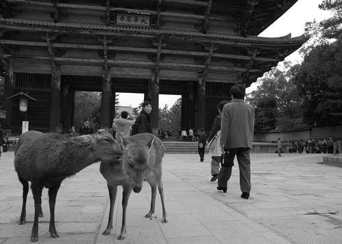 東大寺 鹿