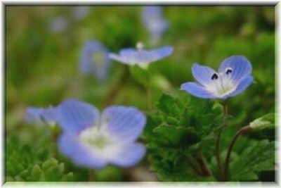 空色の小花 2