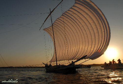 帆引き船 観光操業