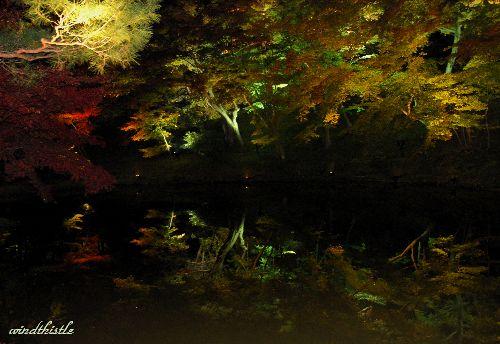 高台寺 池のライトアップ