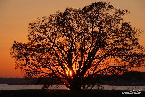 一本の大きな樹