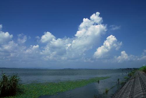 アサザ咲く湖の風景