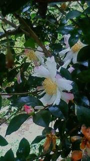 200811161234003.jpg