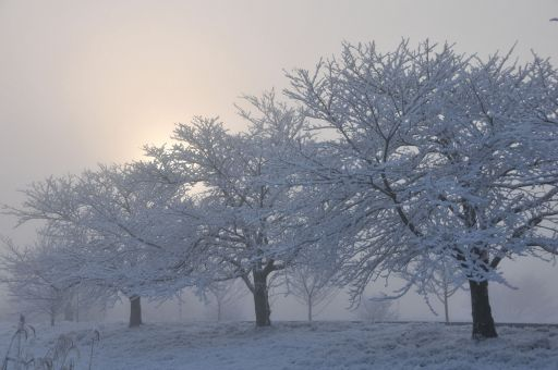 濃霧の雪景色