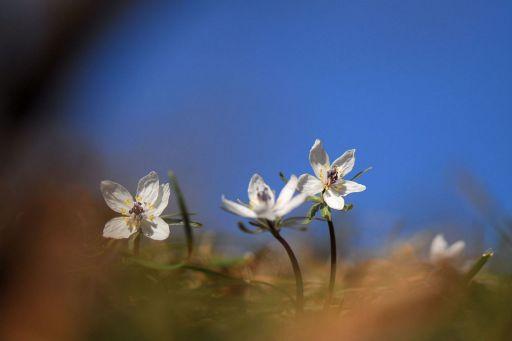 早春の使者たち