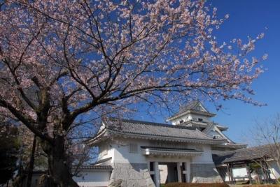 青空と咲き始めの桜