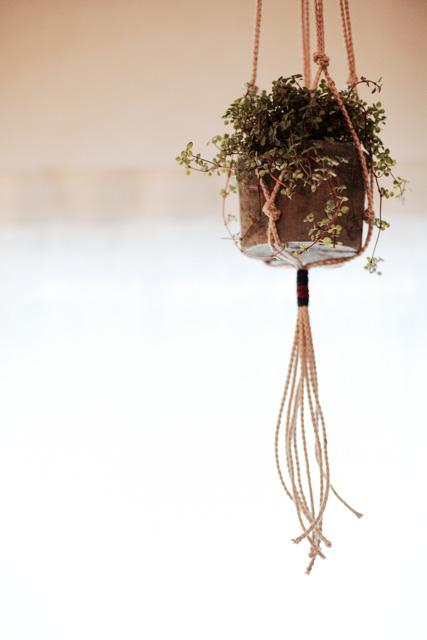 プランツロープ