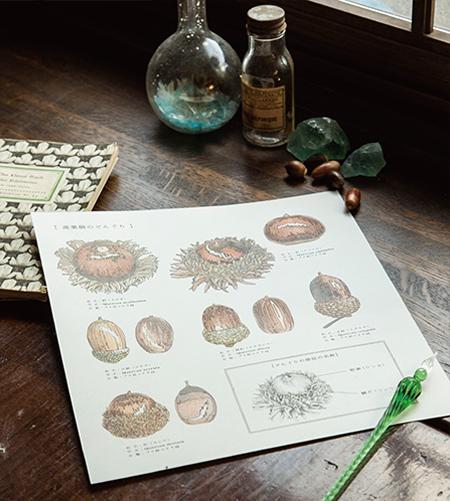 『鉱物と理科室のぬり絵』ルーチカ