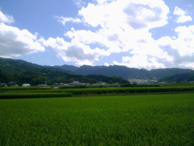2011-09-19 11.55.20.jpg