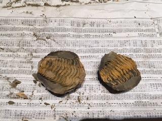 化石2.JPG