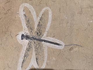 化石4.JPG