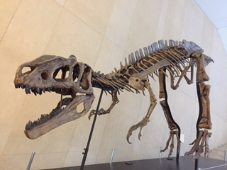 化石5.JPG
