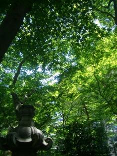 良覚院丁公園の緑