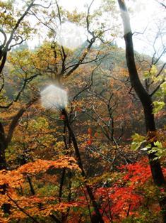 鳴子峡 新遊歩道の紅葉
