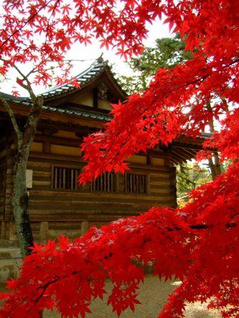 平泉 毛越寺の紅葉