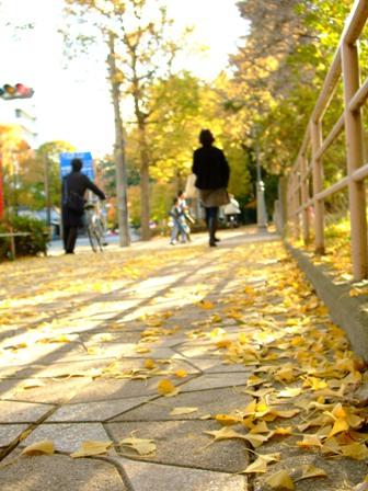仙台 西公園の秋の銀杏並木