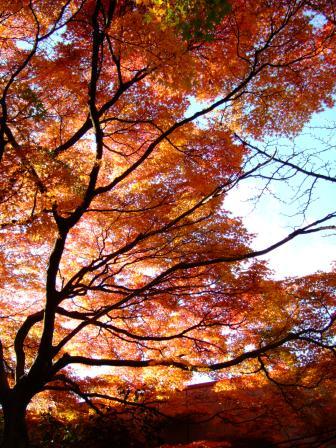 仙台 西公園の紅葉