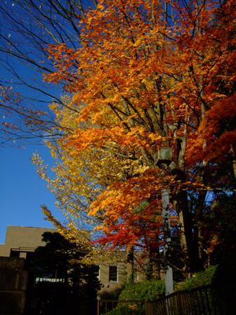 仙台二高の紅葉