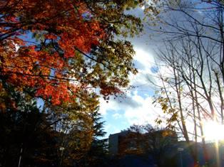 仙台 東北大学図書館前の紅葉